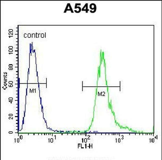 LRRC6 Rabbit anti-Human, Polyclonal, Invitrogen 400 µL; Unconjugated