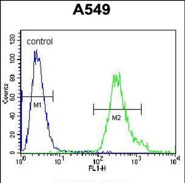 ANKRD58 Rabbit anti-Human, Polyclonal, Invitrogen 400 µL; Unconjugated