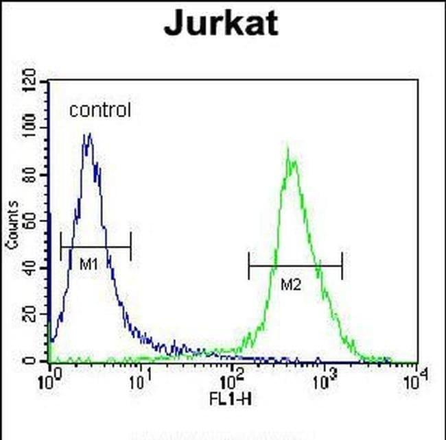 MOGAT3 Rabbit anti-Human, Polyclonal, Invitrogen 400 µL; Unconjugated