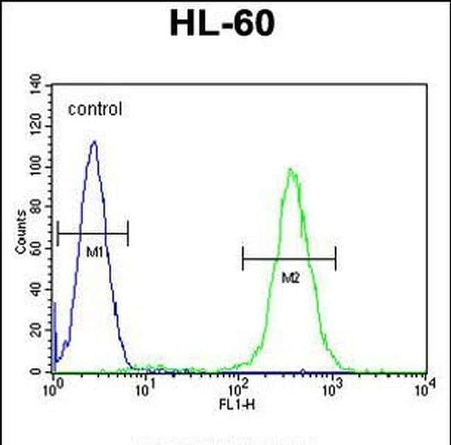 RINL Rabbit anti-Human, Polyclonal, Invitrogen 400 µL; Unconjugated