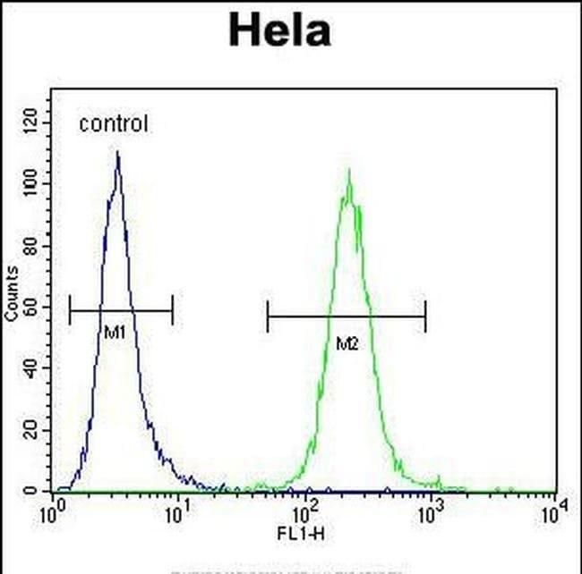 POLR1B Rabbit anti-Human, Polyclonal, Invitrogen 400 µL; Unconjugated