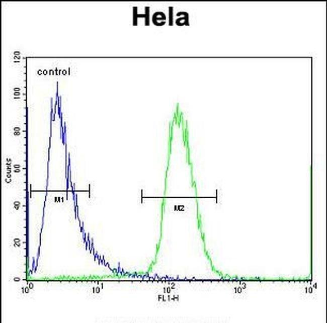 SCHIP1 Rabbit anti-Human, Polyclonal, Invitrogen 400 µL; Unconjugated
