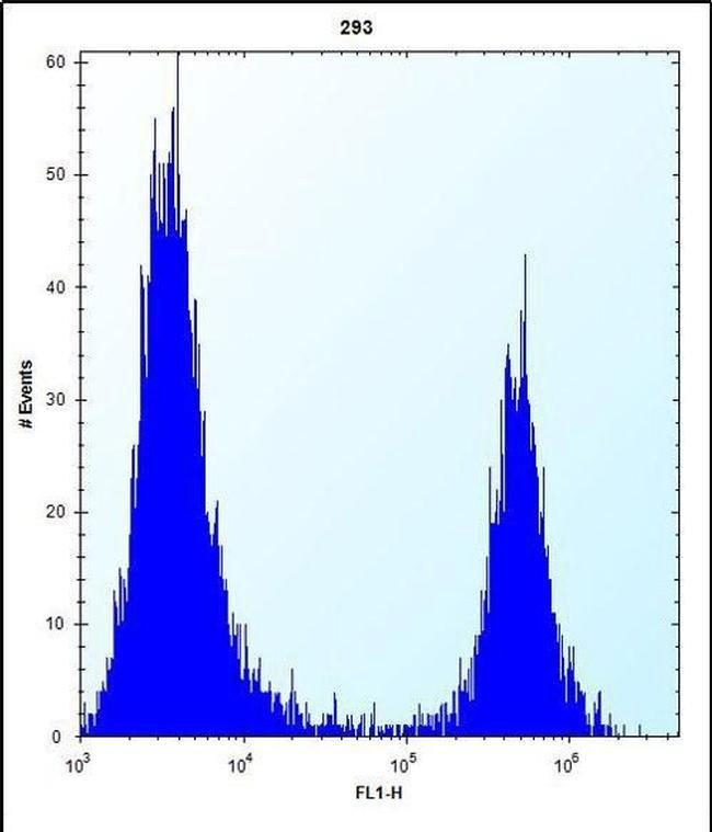 FKBP7 Rabbit anti-Human, Polyclonal, Invitrogen 400 µL; Unconjugated