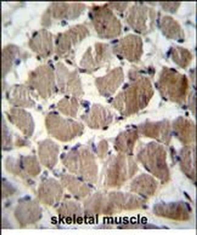 COCH Rabbit anti-Human, Polyclonal, Invitrogen 400 µL; Unconjugated