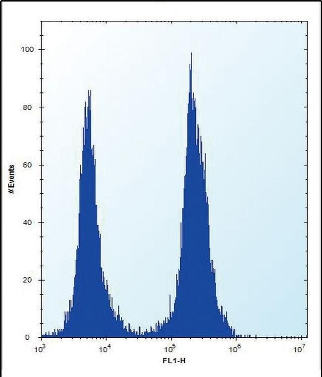 SLC16A10 Rabbit anti-Human, Polyclonal, Invitrogen 400 µL; Unconjugated