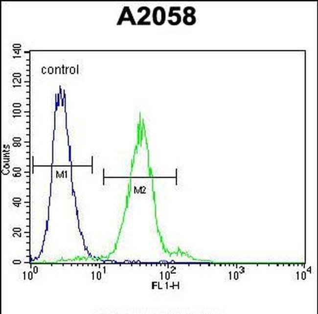 TEX261 Rabbit anti-Human, Polyclonal, Invitrogen 400 µL; Unconjugated