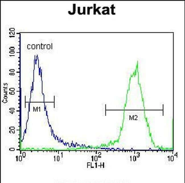 HJURP Rabbit anti-Human, Polyclonal, Invitrogen 400 µL; Unconjugated
