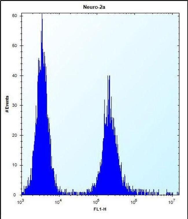 EFCAB7 Rabbit anti-Human, Mouse, Polyclonal, Invitrogen 400 µL; Unconjugated