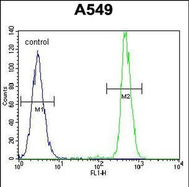 HN1 Rabbit anti-Human, Polyclonal, Invitrogen 400 µL; Unconjugated