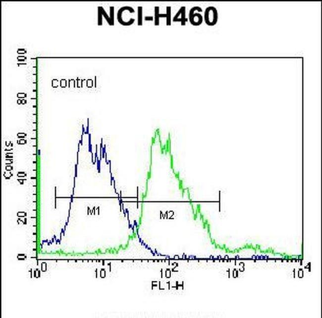 BEND4 Rabbit anti-Human, Polyclonal, Invitrogen 400 µL; Unconjugated