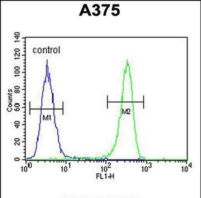 DSC1 Rabbit anti-Human, Polyclonal, Invitrogen 400 µL; Unconjugated
