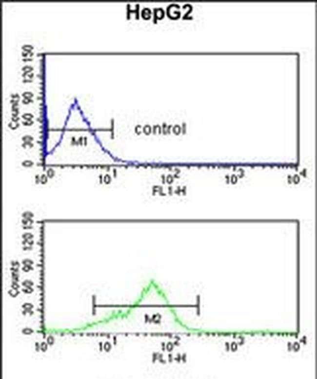 BANK1 Rabbit anti-Human, Polyclonal, Invitrogen 400 µL; Unconjugated