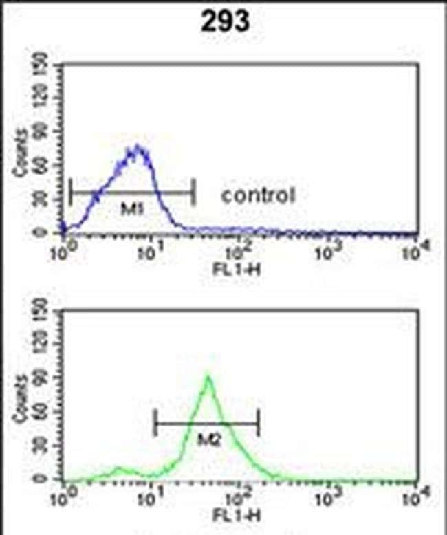 TSPAN12 Rabbit anti-Human, Polyclonal, Invitrogen 400 µL; Unconjugated