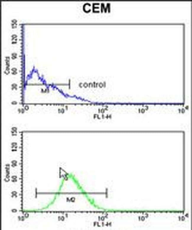 GPANK1 Rabbit anti-Human, Mouse, Polyclonal, Invitrogen 400 µL; Unconjugated