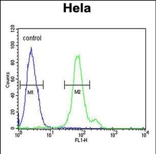 CTPS2 Rabbit anti-Human, Polyclonal, Invitrogen 400 µL; Unconjugated