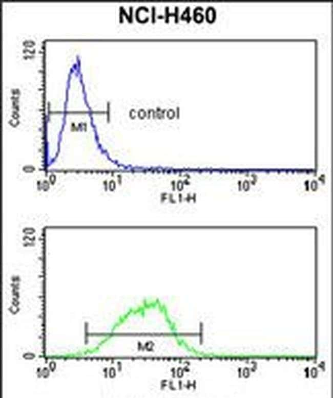 MAG Rabbit anti-Human, Polyclonal, Invitrogen 400 µL; Unconjugated