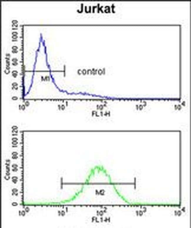 PLCL1 Rabbit anti-Human, Polyclonal, Invitrogen 400 µL; Unconjugated
