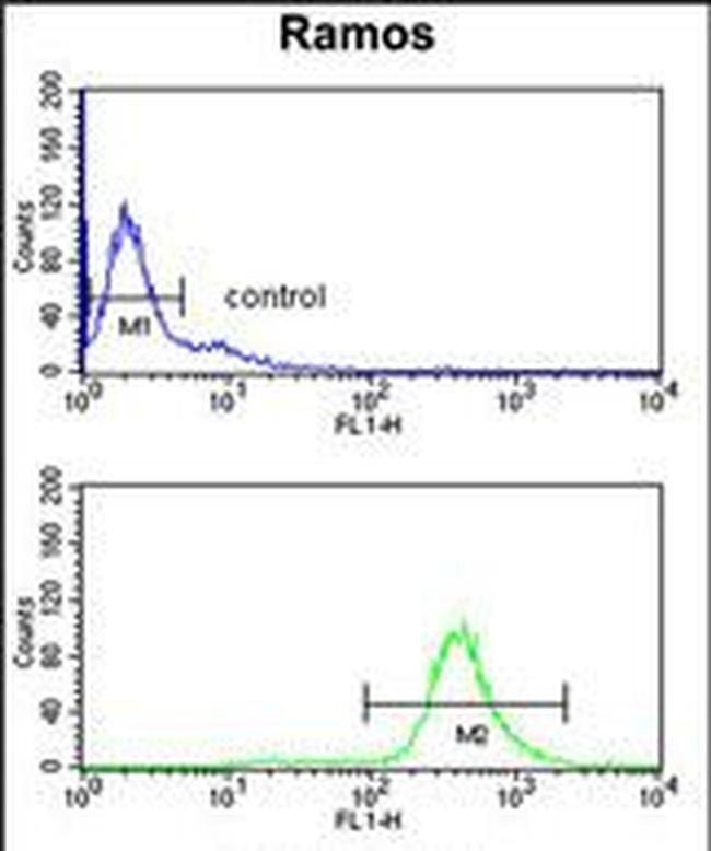 EIF2A Rabbit anti-Human, Polyclonal, Invitrogen 400 µL; Unconjugated