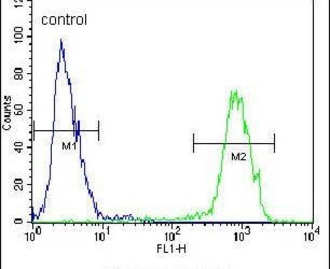 PENK Rabbit anti-Human, Polyclonal, Invitrogen 400 µL; Unconjugated
