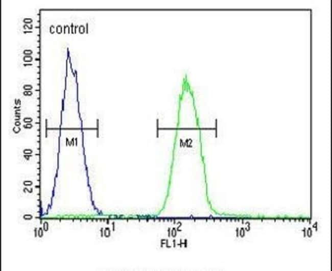 PHLPP2 Rabbit anti-Human, Polyclonal, Invitrogen 400 µL; Unconjugated