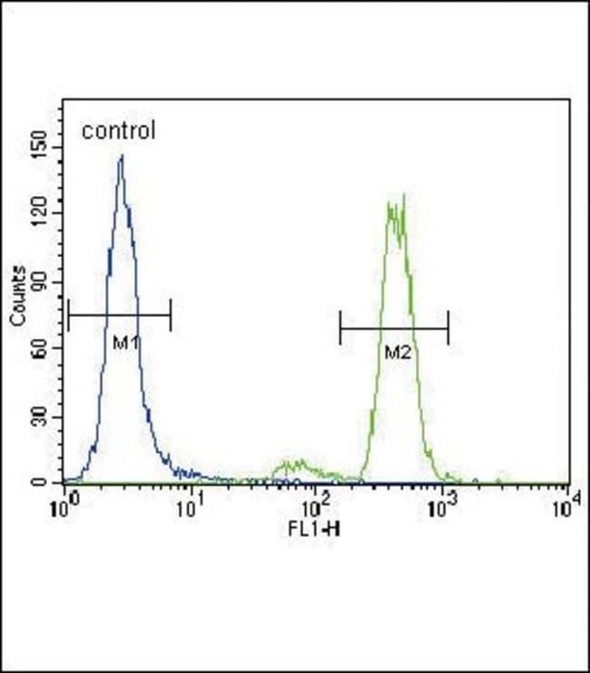 PKC alpha Rabbit anti-Human, Polyclonal, Invitrogen 400 µL; Unconjugated
