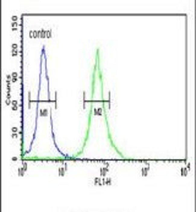 PKM2 Rabbit anti-Human, Polyclonal, Invitrogen 400 µL; Unconjugated