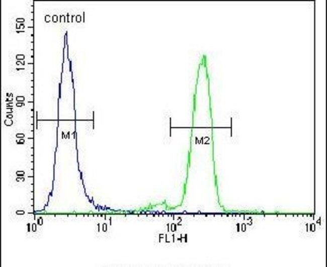 PML Rabbit anti-Human, Polyclonal, Invitrogen 400 µL; Unconjugated