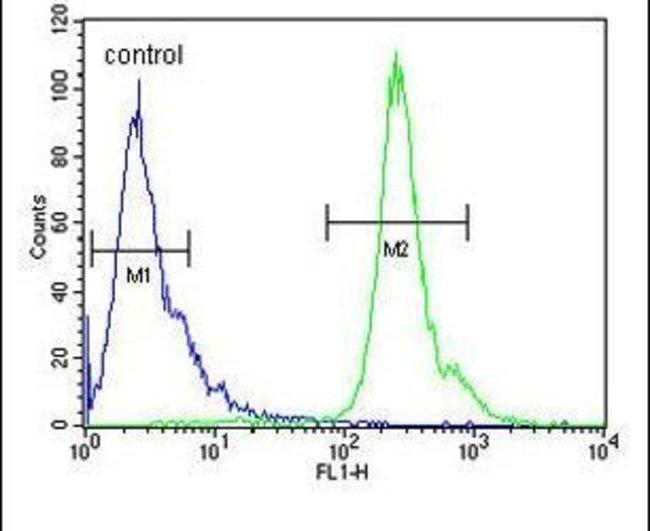 PNPLA8 Rabbit anti-Human, Polyclonal, Invitrogen 400 µL; Unconjugated