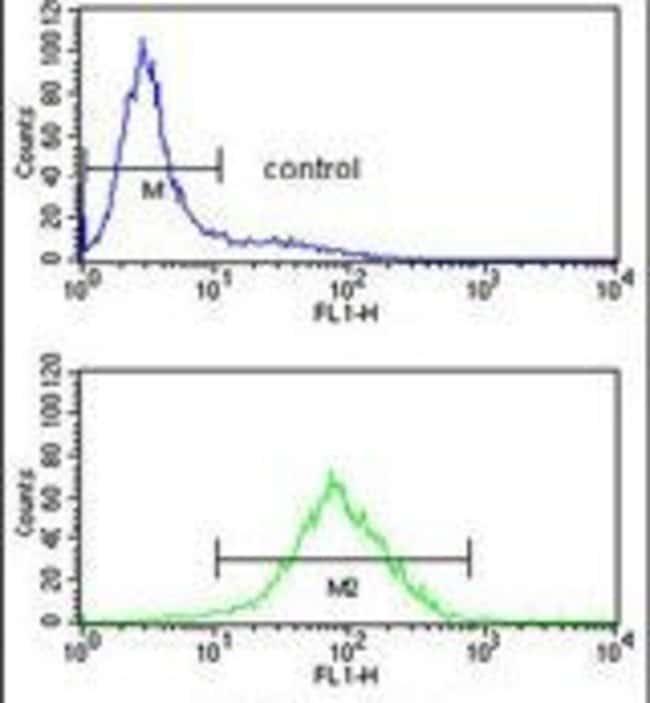 PPM1H Rabbit anti-Human, Mouse, Polyclonal, Invitrogen 400 µL; Unconjugated