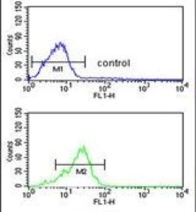 PPP3R2 Rabbit anti-Human, Mouse, Polyclonal, Invitrogen 400 μL; Unconjugated:Antibodies