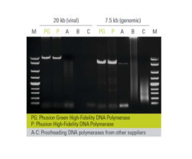 Thermo Scientific™ Phusion High-Fidelity PCR-Kit: Startseite