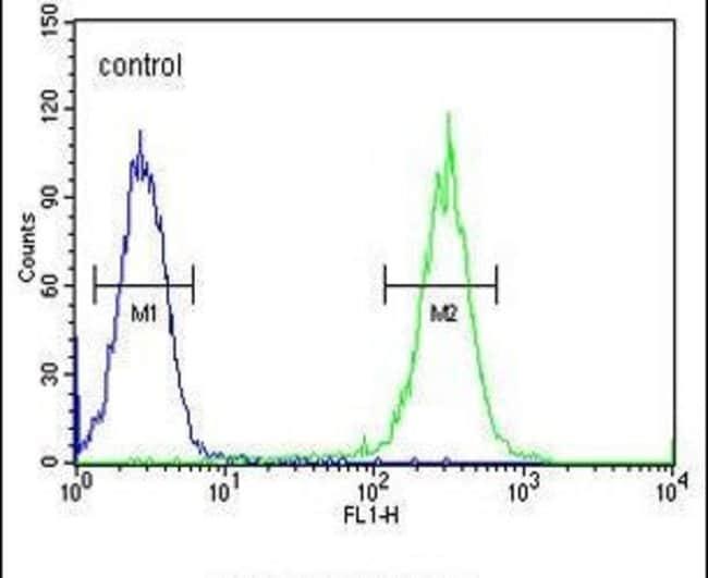 RAD26L Rabbit anti-Human, Polyclonal, Invitrogen 400 µL; Unconjugated
