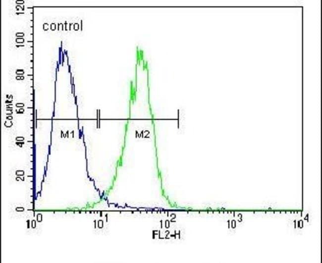 c-Raf Rabbit anti-Human, Polyclonal, Invitrogen 400 µL; Unconjugated