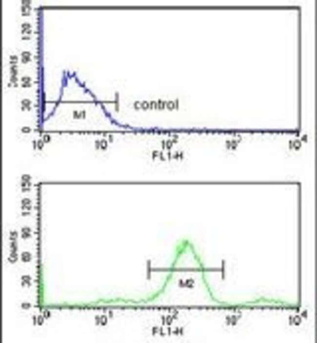 RUVBL1 Rabbit anti-Human, Polyclonal, Invitrogen 400 µL; Unconjugated