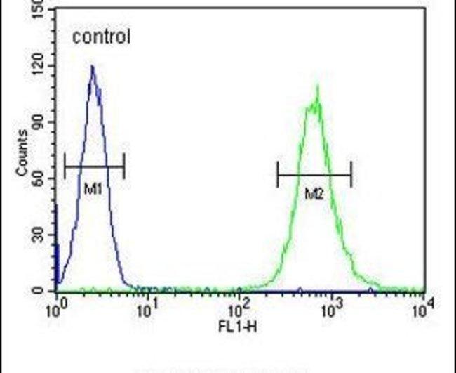 SLC35E2 Rabbit anti-Human, Polyclonal, Invitrogen 400 µL; Unconjugated