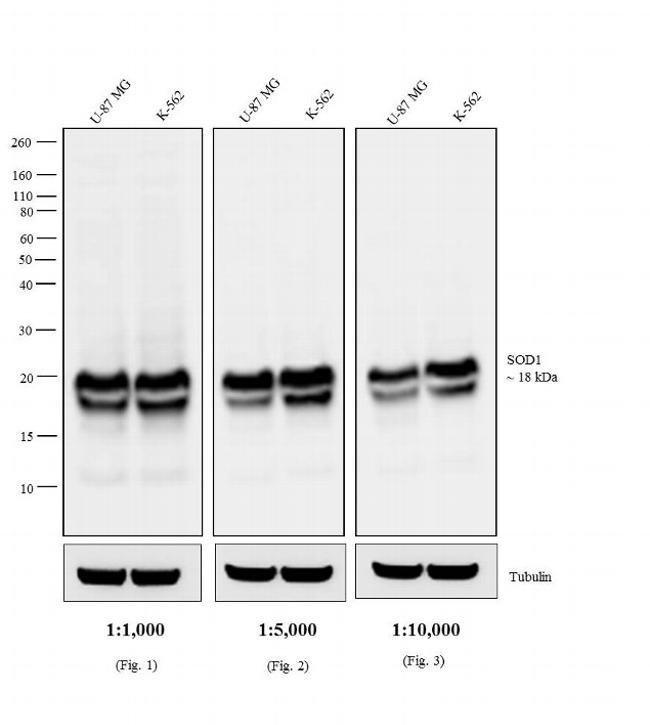 IgG Fab Chicken anti-Mouse, HRP, Invitrogen 500 μg; HRP:Antibodies