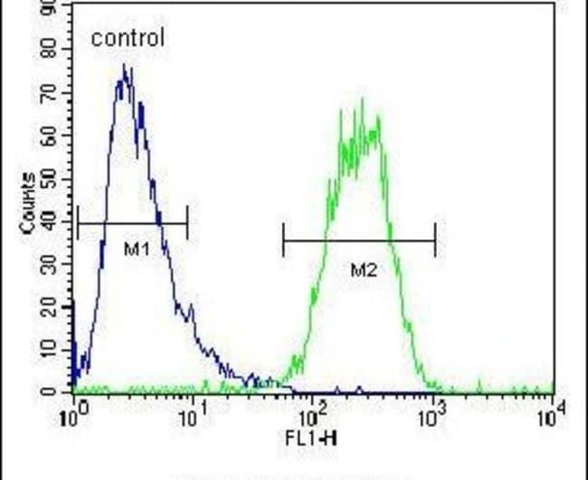 SEC13 Rabbit anti-Human, Polyclonal, Invitrogen 400 µL; Unconjugated