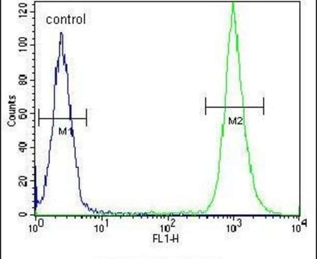 SLC16A11 Rabbit anti-Human, Mouse, Polyclonal, Invitrogen 400 µL;
