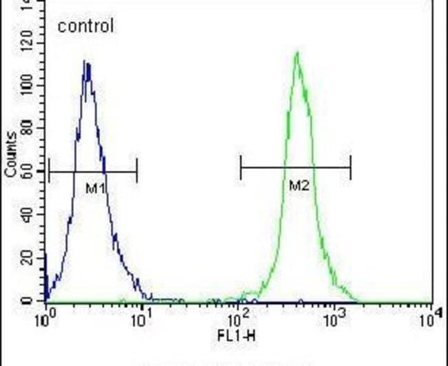 SLC43A2 Rabbit anti-Human, Mouse, Polyclonal, Invitrogen 400 µL; Unconjugated