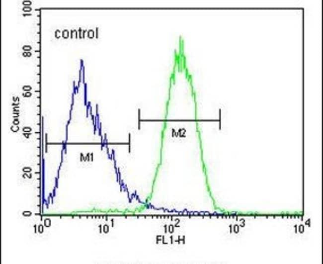 SLFN12L Rabbit anti-Human, Polyclonal, Invitrogen 400 µL; Unconjugated