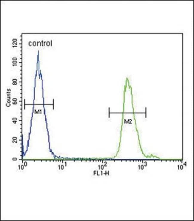 SMAD3 Rabbit anti-Human, Mouse, Polyclonal, Invitrogen 400 µL; Unconjugated