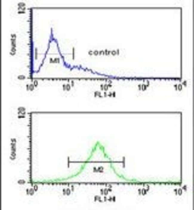 SMAGP Rabbit anti-Human, Polyclonal, Invitrogen 400 µL; Unconjugated