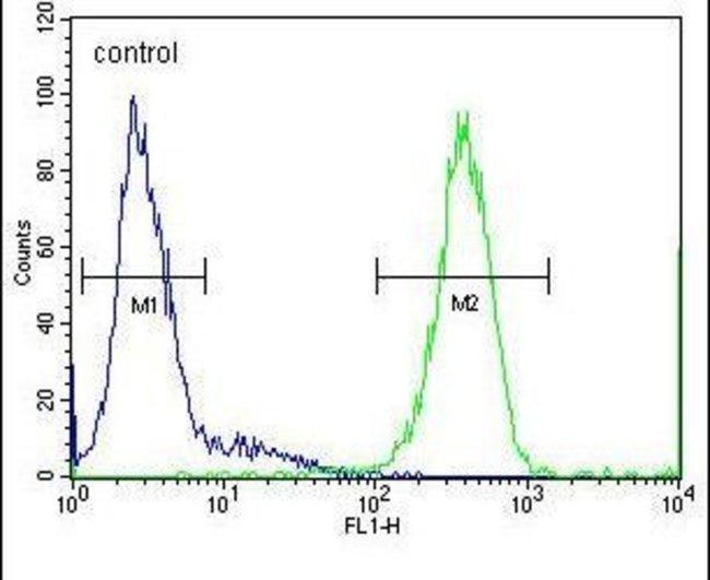 SOHLH1 Rabbit anti-Human, Polyclonal, Invitrogen 400 µL; Unconjugated