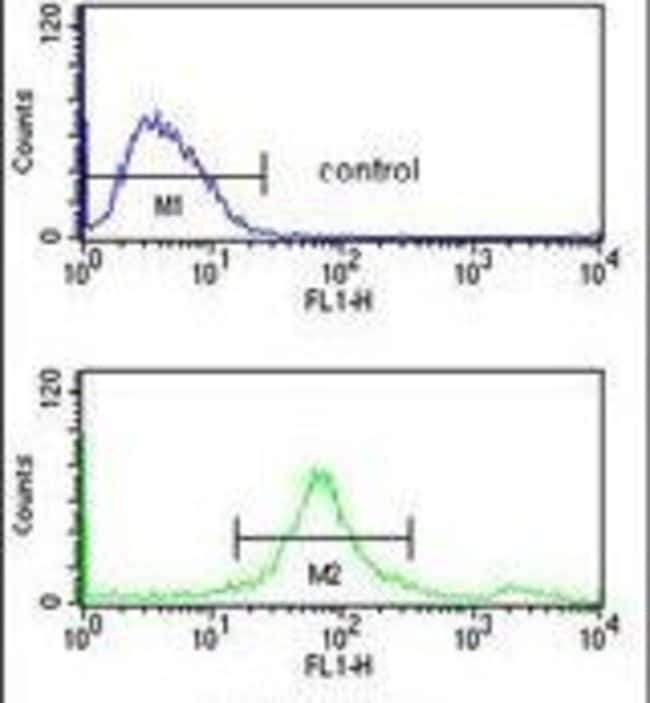 SUMO1 Rabbit anti-Human, Polyclonal, Invitrogen 400 µL; Unconjugated