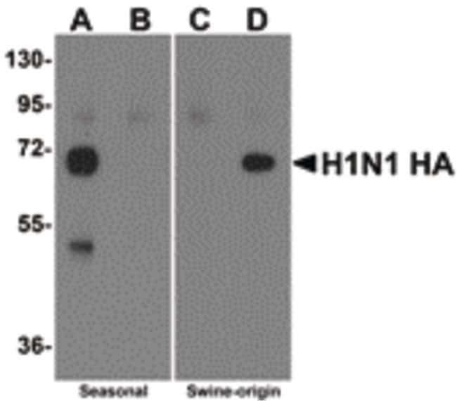 Influenza A H1N1 HA Rabbit anti-Virus, Polyclonal, Invitrogen 100 µg;