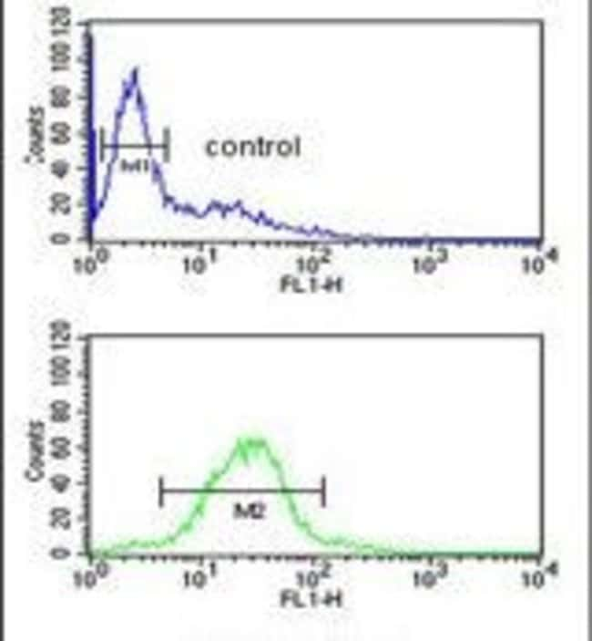 TAF1D Rabbit anti-Human, Mouse, Polyclonal, Invitrogen 400 µL; Unconjugated