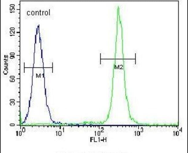 TMEM165 Rabbit anti-Human, Polyclonal, Invitrogen 400 µL; Unconjugated