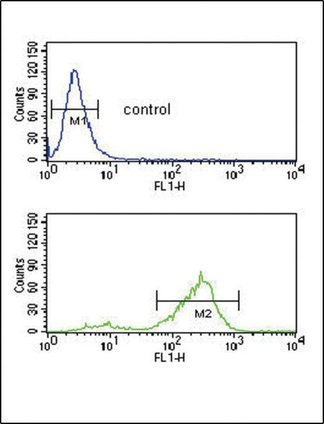 Vitronectin Rabbit anti-Human, Polyclonal, Invitrogen 400 µL; Unconjugated