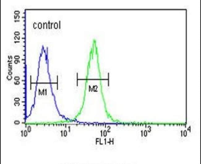 WDR73 Rabbit anti-Human, Polyclonal, Invitrogen 400 µL; Unconjugated