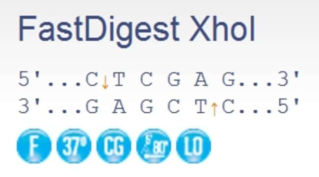 Thermo Scientific™ FastDigest™ XhoI